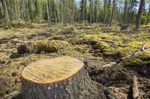 2009-02-12-deforestation2