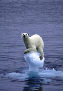 http://digg.com/environment/Global_Warming_Polar_Bear_pic